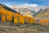 Naked Color By late September the aspens at the higher elevations
