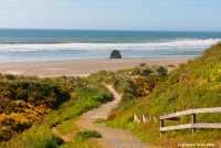 Bandon Beach Morning Pockets of yellow flowering gorse line this pathway